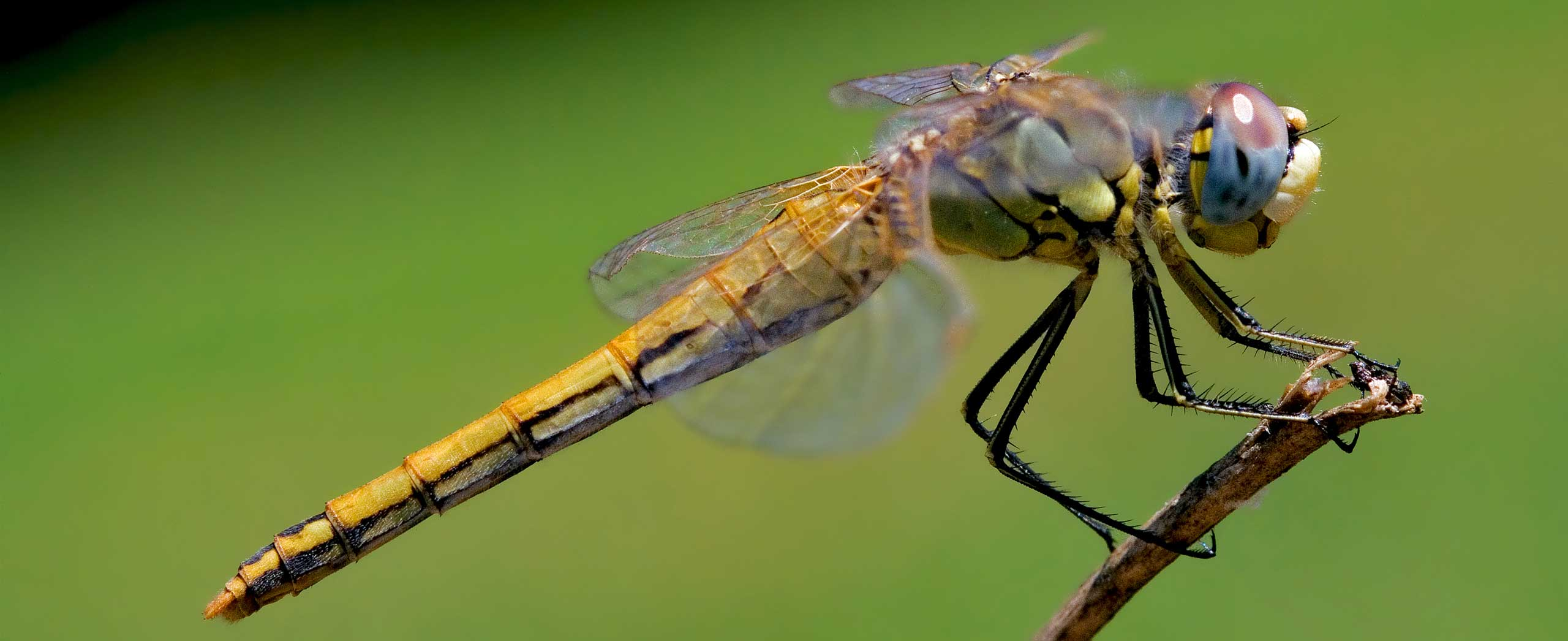 Do Dragonflies Breathe Fire? | Wonderopolis